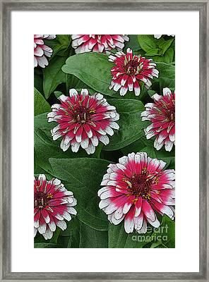 Flower Festival Framed Print by Diane E Berry