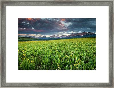 Flower Field And Sneffels Range Framed Print