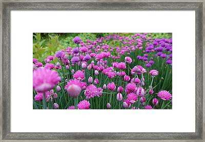 Whistler, British Columbia Framed Print