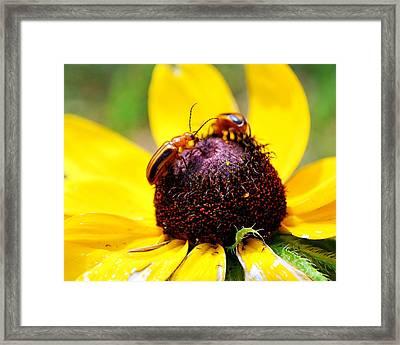Flower Friends Framed Print by Amanda Vouglas