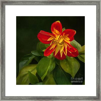 Flower From Seward Garden Framed Print