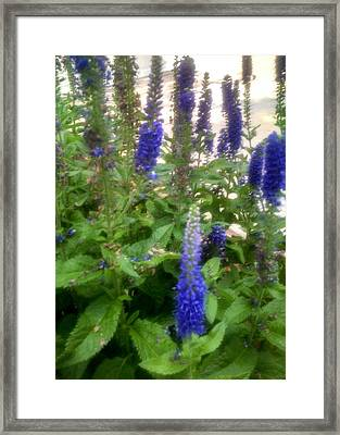 Flower Garden Framed Print by Connie Young