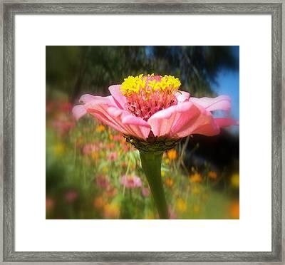 Flower Garden Framed Print by Dottie Dees