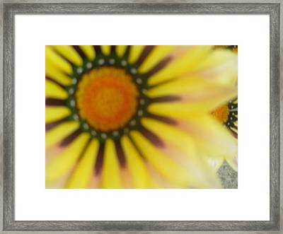 Flower Gazing At You Framed Print