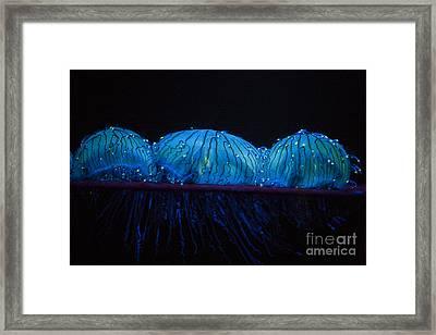 Flower Hat Jelly Framed Print