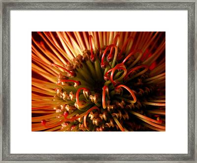 Framed Print featuring the photograph Flower Hawaiian Protea by Nancy Griswold
