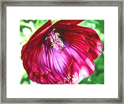 Flower - Hibiscus - Cranberry Crush Framed Print