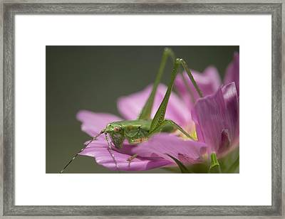Flower Hopper Framed Print by Michael Eingle