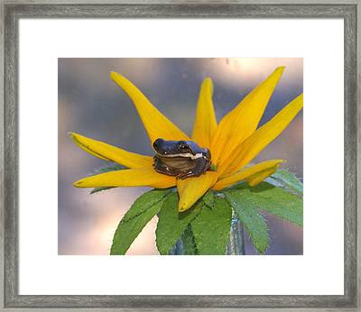 Flower Hopping Framed Print by Debbie May