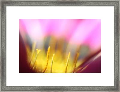 Flower Impressions I Framed Print