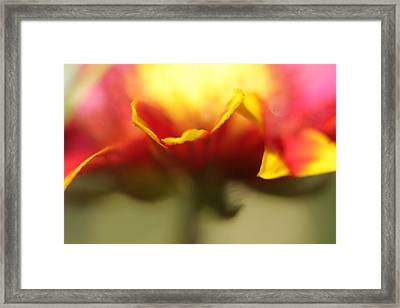 Flower Impressions II Framed Print