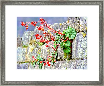 Framed Print featuring the photograph Flower In An Inca Wall by Nigel Fletcher-Jones