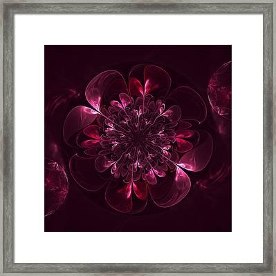 Flower In Bordo Framed Print