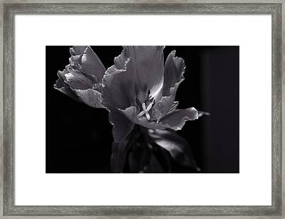 Flower In Monotone Framed Print by Sheryl Thomas