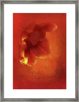 Flower In Red Framed Print by Johan Lilja