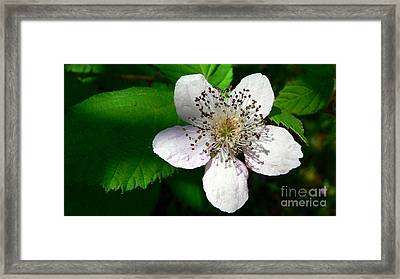 Framed Print featuring the photograph Flower In Shadow by Larry Keahey
