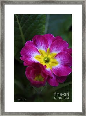Flower In Spring Framed Print by Deborah Benoit