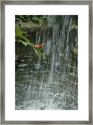Flower In The Falls Framed Print by Kicking Bear  Productions
