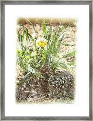 Flower In The Pines Framed Print