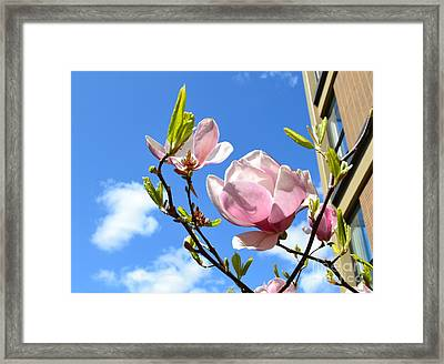 Flower In The Sky Framed Print by Patricia  S