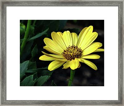 Flower In Yellow Framed Print by Mikki Cucuzzo