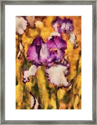 Flower - Iris - Diafragma Violeta Framed Print by Mike Savad