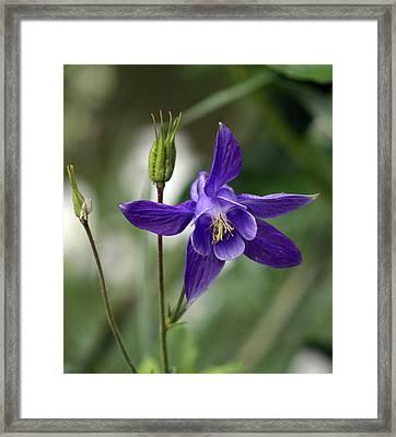 Flower Framed Print by Jeff Porter