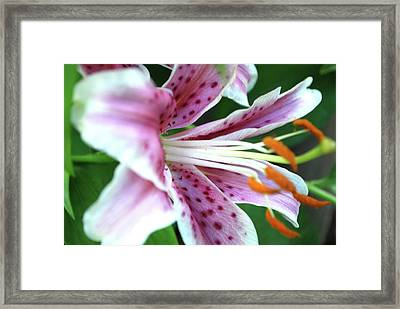Flower Framed Print by Karina Khan