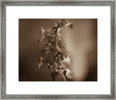 Framed Print featuring the photograph Flower by Keith Elliott