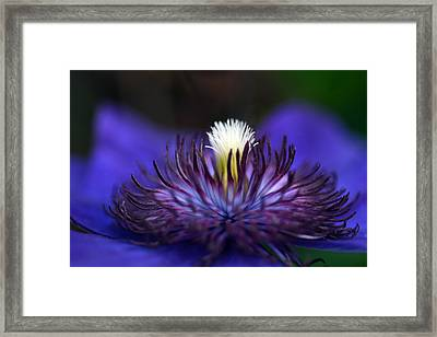 Flower Light Framed Print