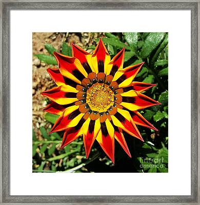 Flower -  Made In Nature Framed Print by Jasna Gopic