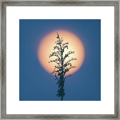 Flower Moon May 2017 Square Framed Print by Terry DeLuco