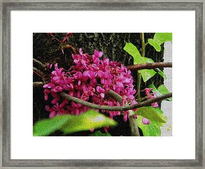 Framed Print featuring the photograph Flower Mosaic by Manuela Constantin