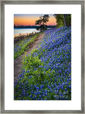 Flower Mound Framed Print by Inge Johnsson