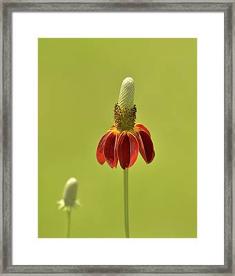 Flower  Framed Print by Nancy Landry