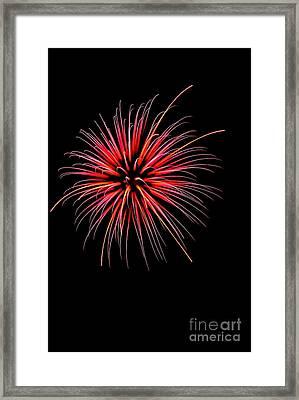 Flower No 2 4925 Framed Print
