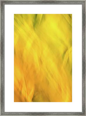 Flower Of Fire 2 Framed Print