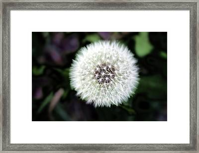 Flower Of Flash Framed Print by Mark Ashkenazi