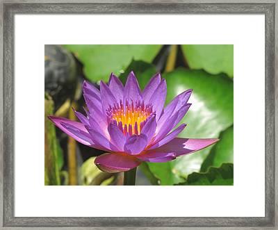 Flower Of The Lilly Framed Print