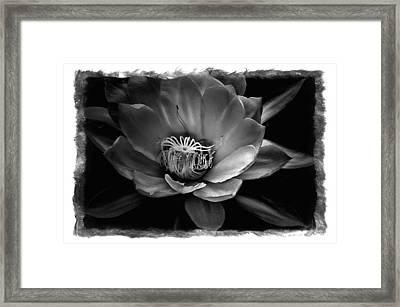Flower Of One Night Framed Print by Tom Bell