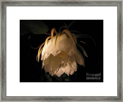 Flower Of The Night 02 Framed Print by Andrea Jean