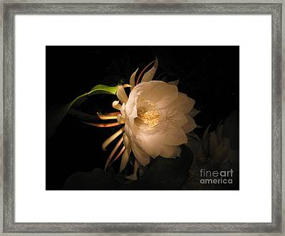 Flower Of The Night 04 Framed Print by Andrea Jean
