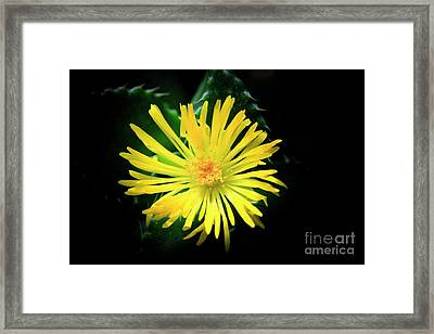 Flower Of Tiger's Jaw Framed Print by Charline Xia