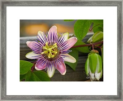 Flower On A Fence Framed Print