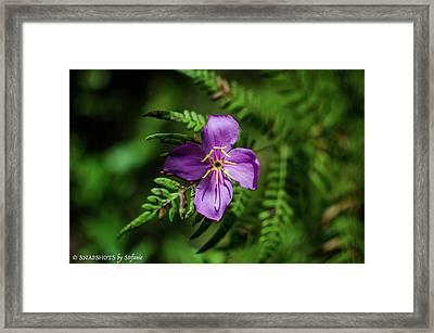 Flower On The Fern Framed Print by Stefanie Silva
