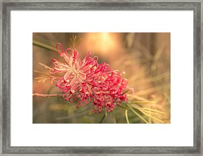Flower On The Sun Framed Print by Stanislav Kaplunov