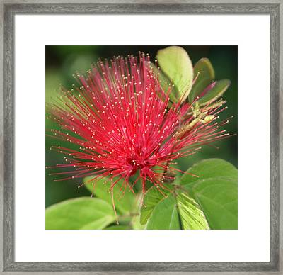 Flower Optics 2 Framed Print by Debbie May