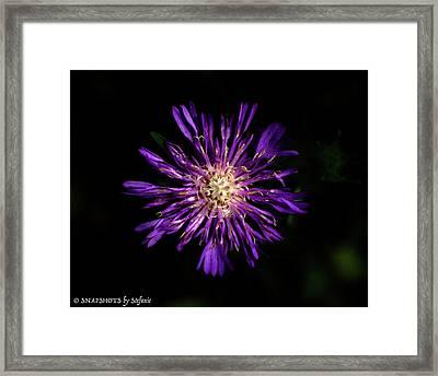 Flower Or Firework Framed Print by Stefanie Silva