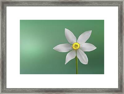 Flower Paradise Framed Print by Bess Hamiti