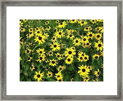 Flower Patch Framed Print by Timothy Jones